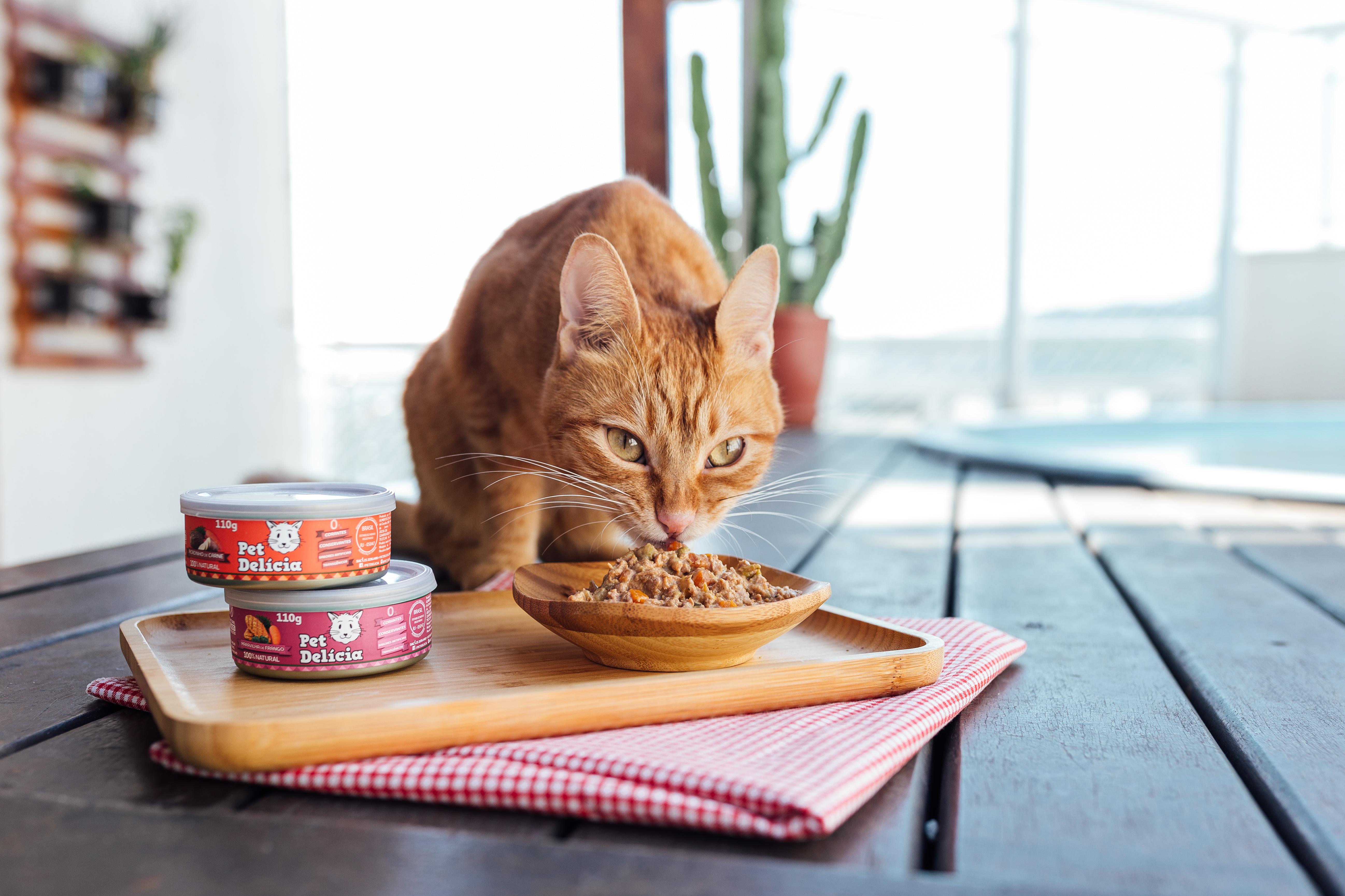 Aimportância Do Alimento Úmido Na Dieta Do Gato