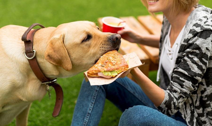 Mulher dando um sanduíche para cachorro