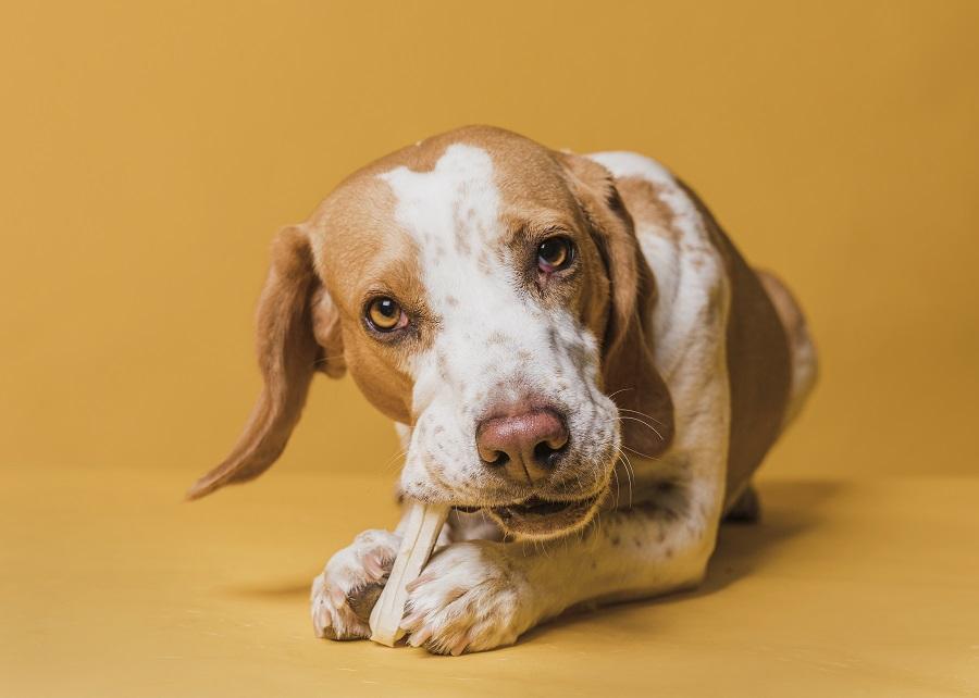 Cachorro comendo osso