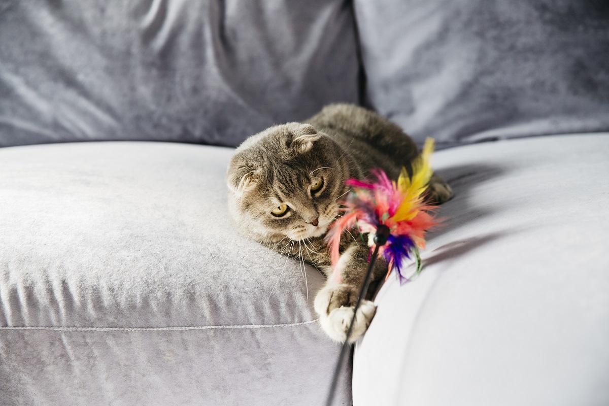 Gato brincando com penas