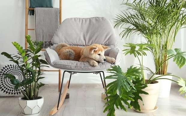 Plantas tóxicas para Animais: como proteger seu pet