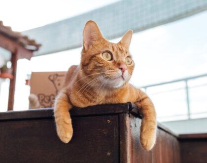 Gatos e independência: será que eles são menos carinhosos mesmo?