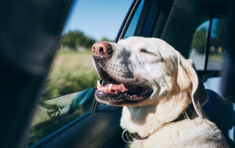 Viajando com seu pet em segurança