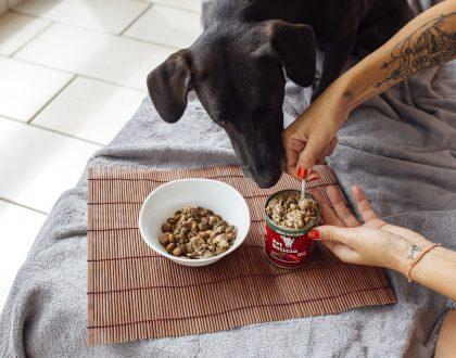 Como introduzir uma nova alimentação para o seu pet