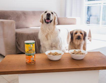 Cães e Gatos podem comer comida de gente?