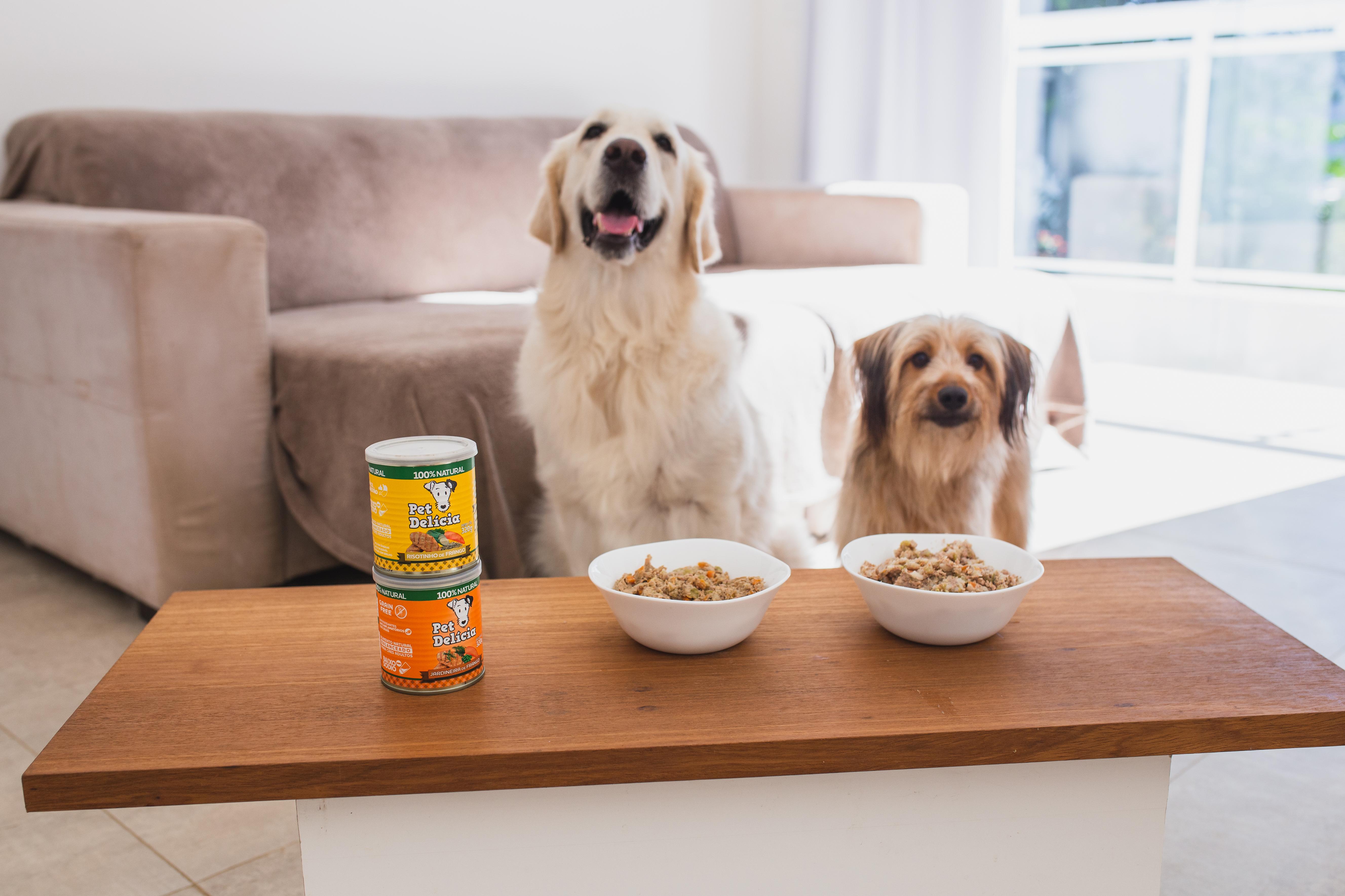 Comida natural para Pets auxilia na prevenção de doenças